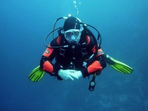 duiker in de zee