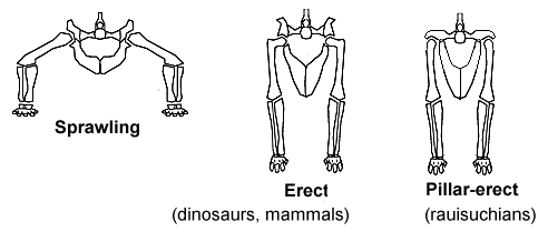 heupen dinosaurus