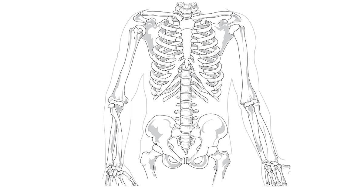 Hoeveel botten en spieren heeft een mens for Hoeveel traptreden heeft een trap