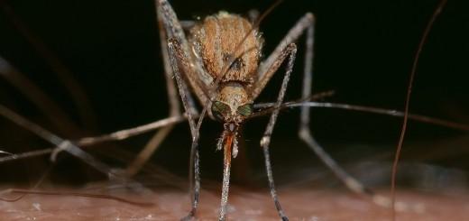 Het nut van muggen