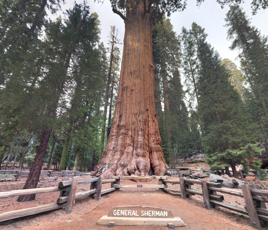De grootste boom hoogste boom en oudste boom ter wereld - Deksel van de boom ...