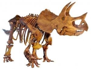 skelet dinosaurus