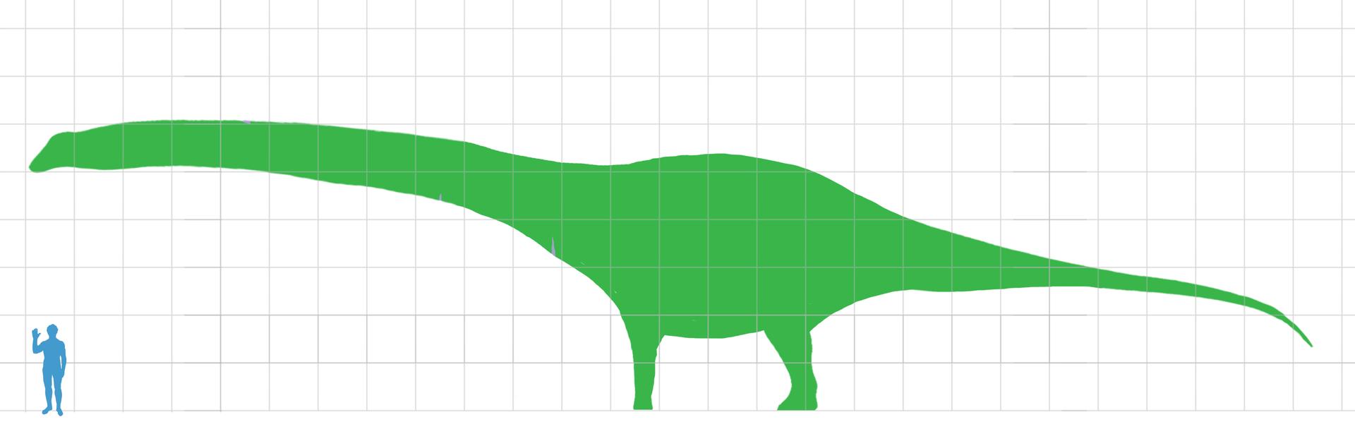 dinosaurusdreadnoughtus