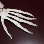 Een hand heeft 27 botten
