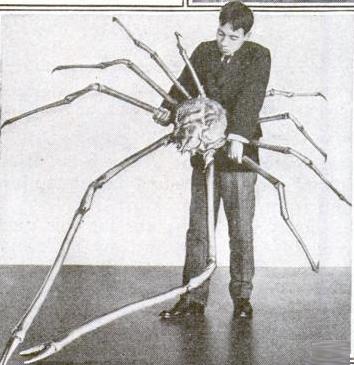Japanse Reuzenkrab 1920