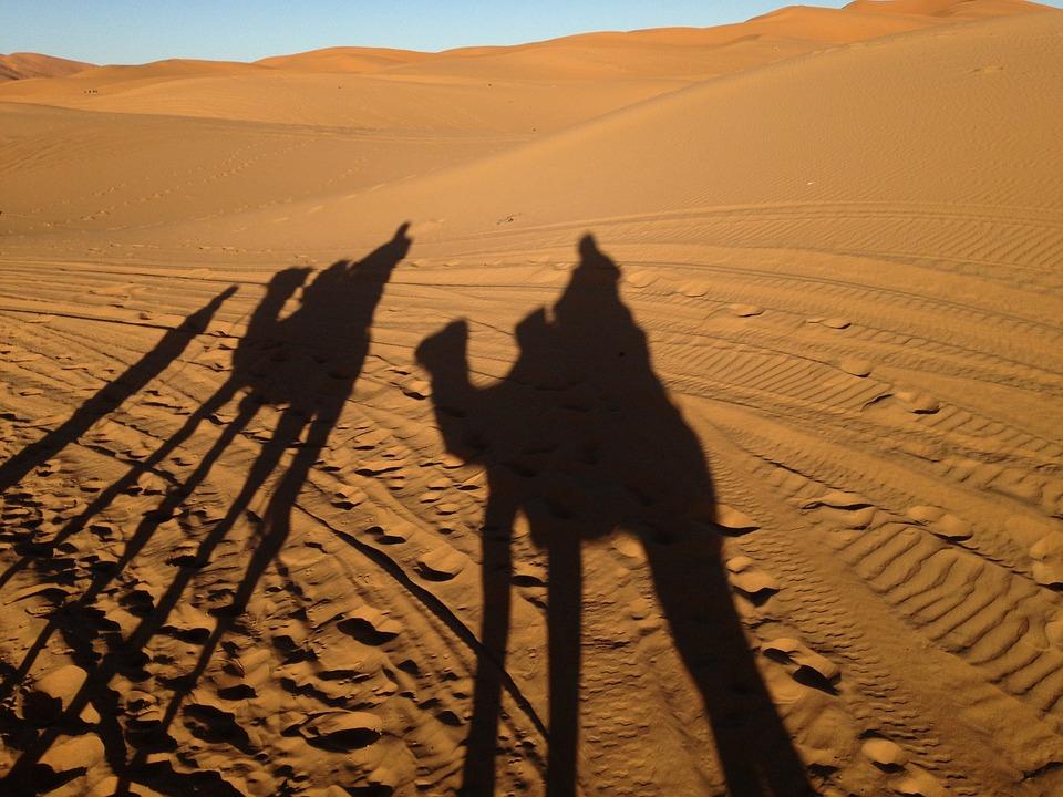 ontdekkingsreizigers-kamelen