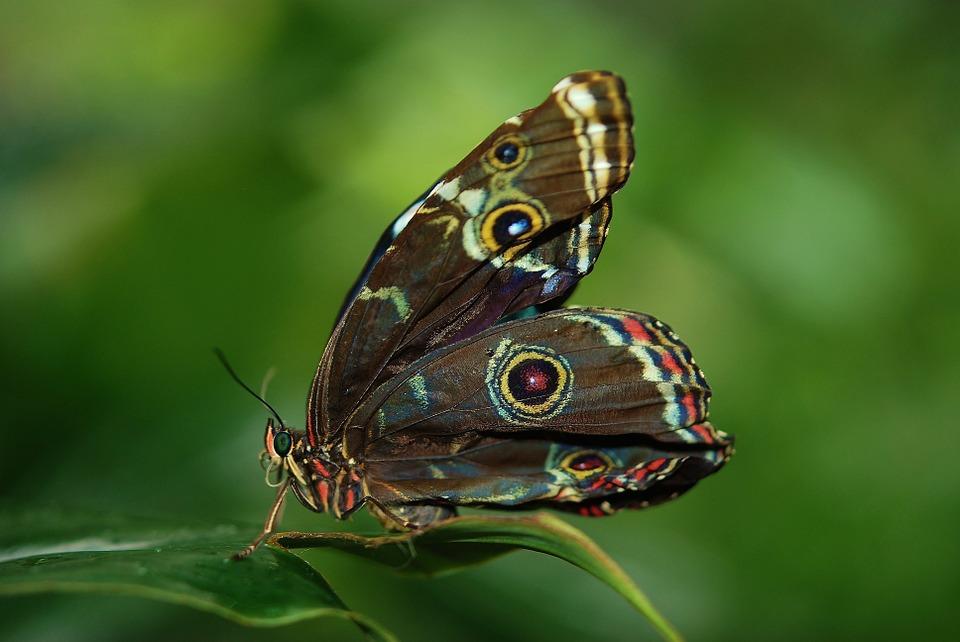 vlindersvlinder1