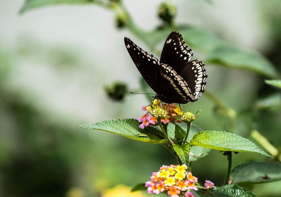 vlindersvlinder2