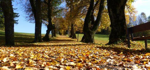 Wanneer begint de herfst