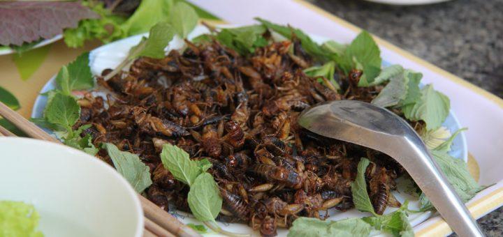 gezond insecten eten